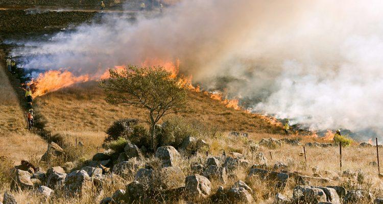 Brand i gräs