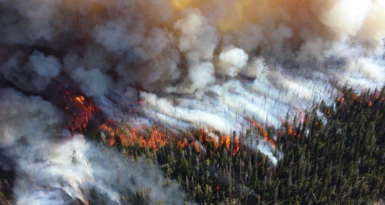 Bild på skog som brinner.